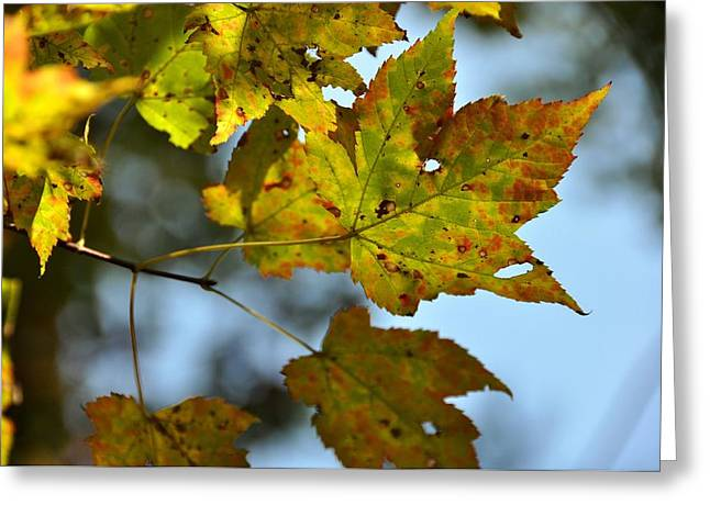 Red Fallen Leave Photographs Greeting Cards - Ilovefall Greeting Card by JAMART Photography
