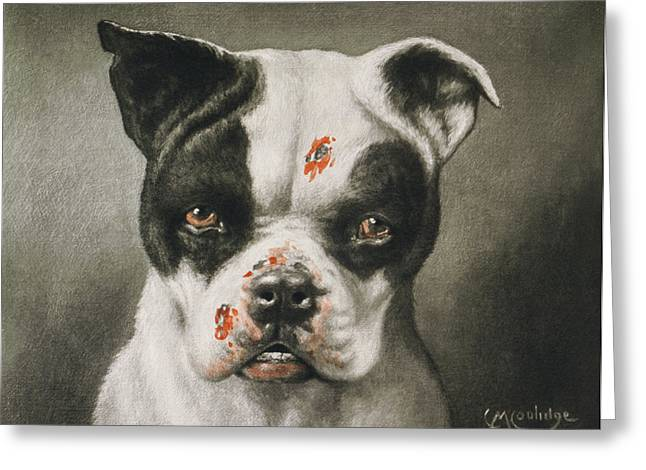 Boston Terrier Greeting Cards - Im a bad dog What kind of a dog are you Circa 1895 Greeting Card by Aged Pixel