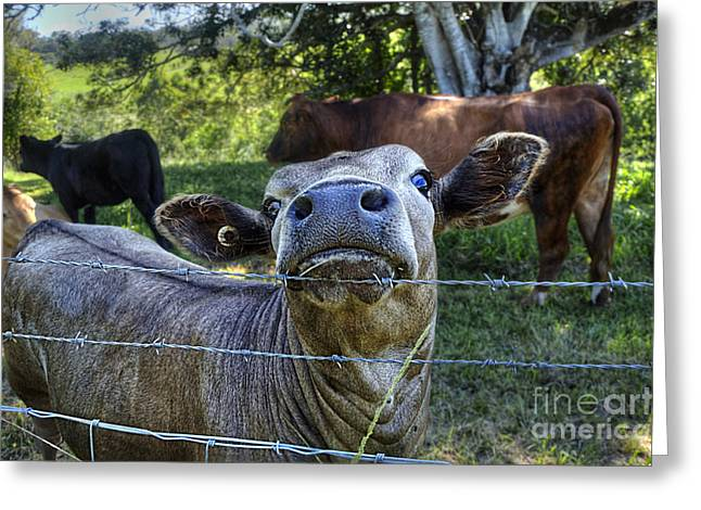 Bos Bos Greeting Cards - Im all Ears Greeting Card by Kaye Menner