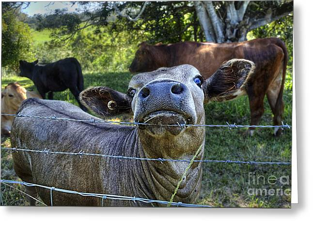 I'm All Ears Greeting Card by Kaye Menner