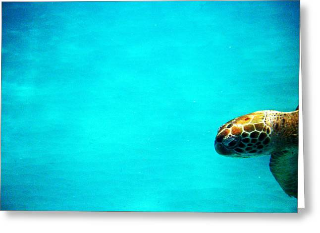 Undersea Photography Digital Art Greeting Cards - Aquatic Life Sea Turtles - Im Almost there... Greeting Card by James Turnbull