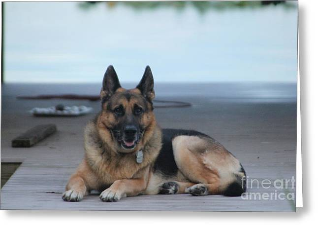 German Shepard Dogs Greeting Cards - Im Awake Greeting Card by Janice Keener