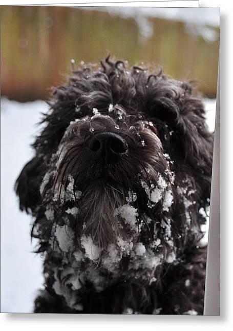 Dogs In Snow. Greeting Cards - Im Cold Greeting Card by Ruben Barbosa