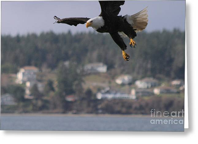 I'm Coming In For A Landing Greeting Card by Kym Backland