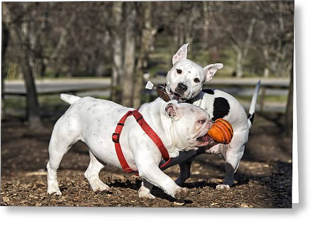 Dog Playing Ball Greeting Cards - Im Going Home Greeting Card by Steven  Michael