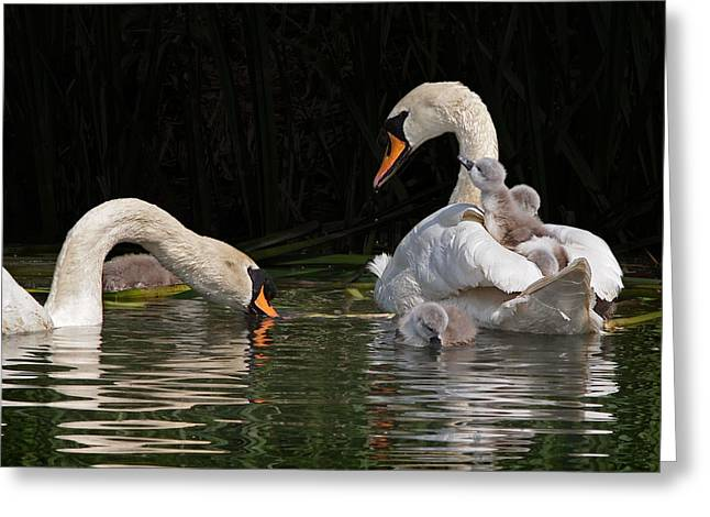 I'm Here Mommy Greeting Card by Gill Billington