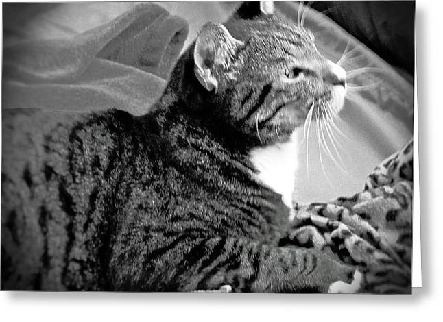 Photos Of Cats Greeting Cards - Im Just Ignoring Her Greeting Card by Nancy  Hopkins