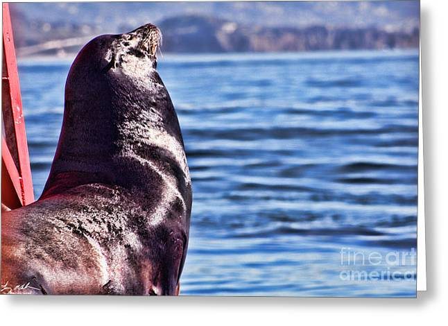 Best Sellers -  - California Sea Lions Greeting Cards - Im king of my world Greeting Card by Tommy Anderson