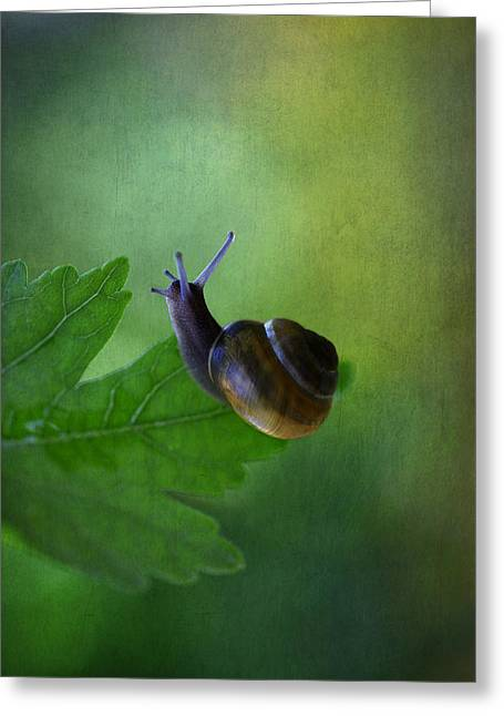 Decorativ Photographs Greeting Cards - Im not so fast Greeting Card by Annie  Snel