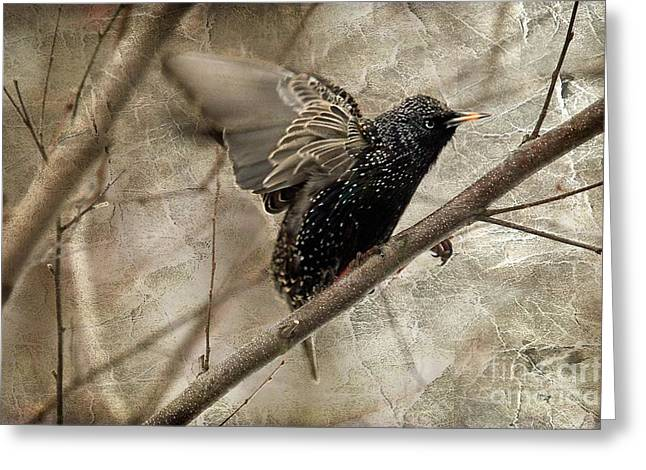 Starlings Greeting Cards - Im Outta Here Greeting Card by Lois Bryan