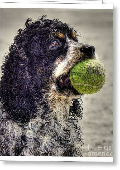 Dog With Tennis Ball Greeting Cards - Im Ready to Play Greeting Card by Benanne Stiens