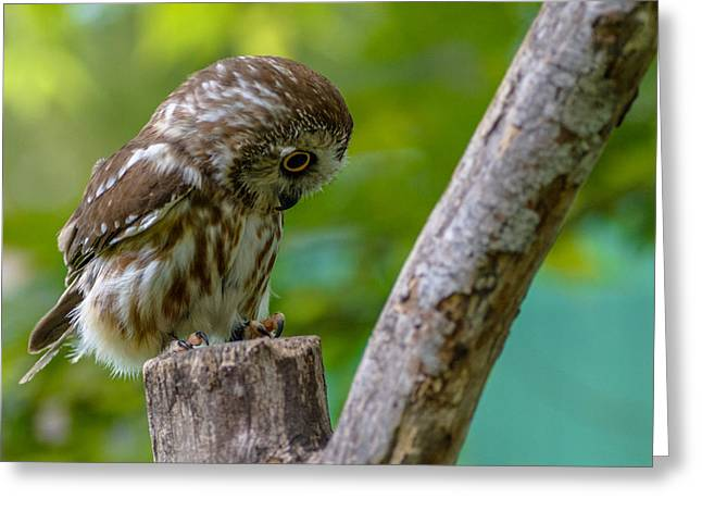 Nature Center Greeting Cards - Im So Saw-ry Greeting Card by Randy Scherkenbach