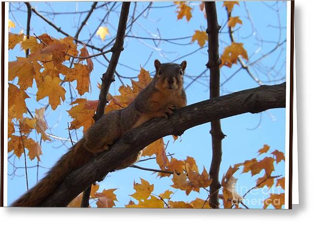 Fox Squirrel Greeting Cards - Im Watching you Greeting Card by Sara  Raber