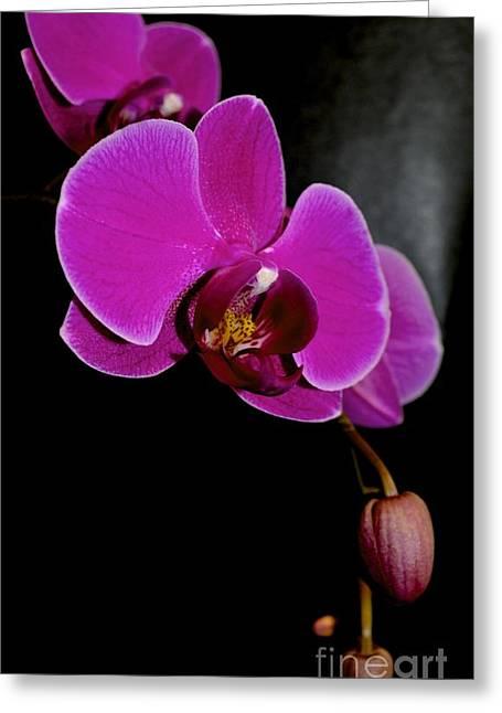 Flower Still Life Prints Greeting Cards - Imagine Greeting Card by Lynn R Morris