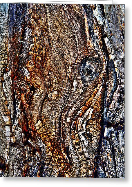 Images In Bark 0663 Greeting Card by Brett Wiatre