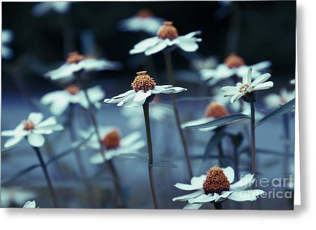 Daisy Greeting Cards - Imagine f03a Greeting Card by Variance Collections
