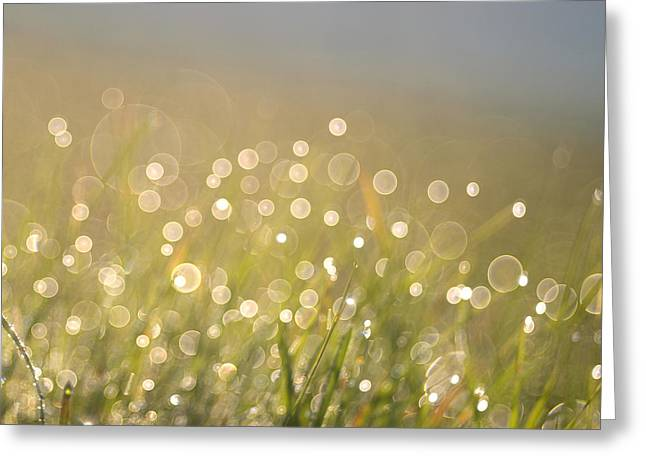 Green Blade Of Grass Greeting Cards - Immerse In... Greeting Card by Jana Behr
