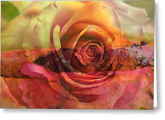Eternal Flow Photographs Greeting Cards - Immersed Greeting Card by Shirley Sirois