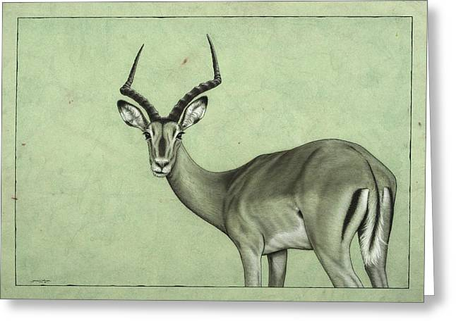 African Drawings Greeting Cards - Impala Greeting Card by James W Johnson