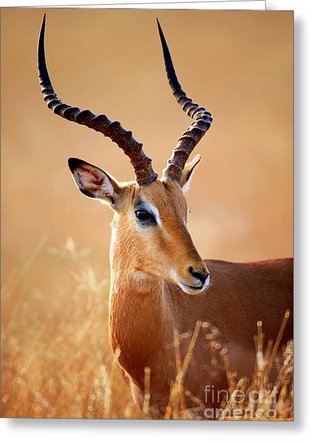 One Animal Greeting Cards - Impala male portrait Greeting Card by Johan Swanepoel