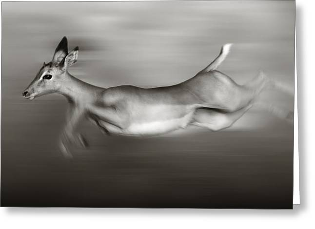 Energetic Greeting Cards - Impala running  Greeting Card by Johan Swanepoel