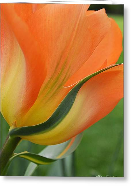 Green And Yellow Greeting Cards - Imperfect beauty Greeting Card by Felicia Tica