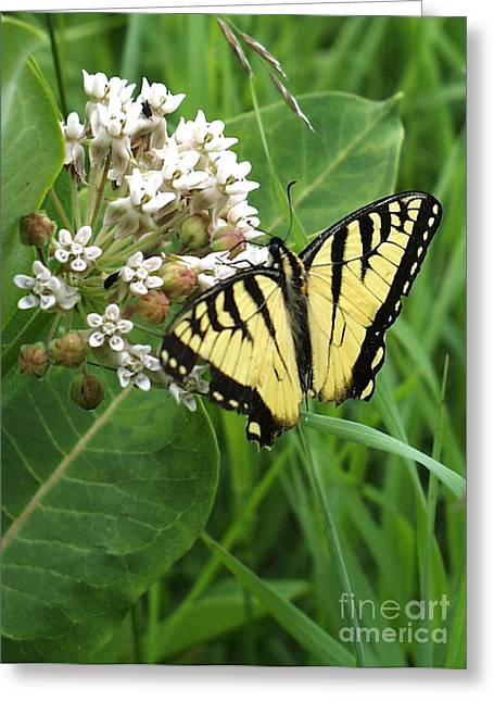 Dantzler Greeting Cards - Imperfect Butterfly Greeting Card by Andrew Govan Dantzler
