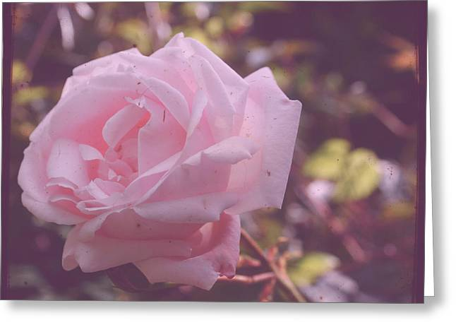 Imperfect Greeting Cards - Imperfect Rose Greeting Card by Nomad Art And  Design