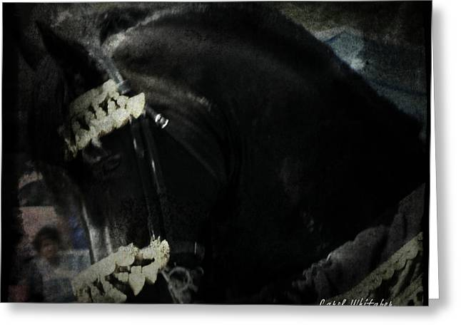 Imperial Friesian Greeting Card by Royal Grove Fine Art