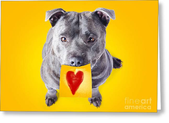 Doggy Cards Greeting Cards - Imploring staffie with a sticky note on his mouth Greeting Card by Ryan Jorgensen
