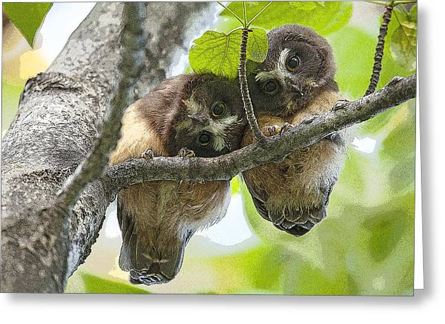 Baby Bird Greeting Cards - Impossibly Cute Owl Fledglings- Abstract Greeting Card by Tim Grams