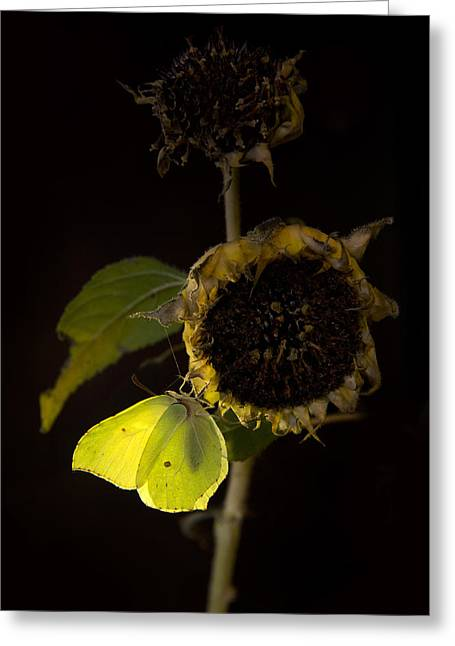 From Seed Greeting Cards - Impression at night Greeting Card by Jaroslaw Blaminsky