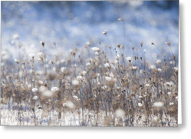 Flovers Greeting Cards - Impressionist mood Greeting Card by Christian  Svastits