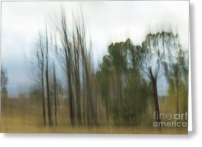Dave Bosse Greeting Cards - Impressionistic Trees Greeting Card by Dave Bosse