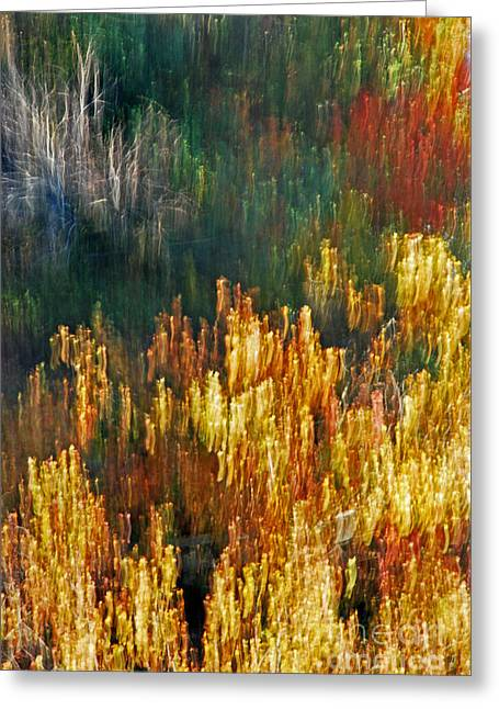 Impressionists Autumn Greeting Card by Skip Willits