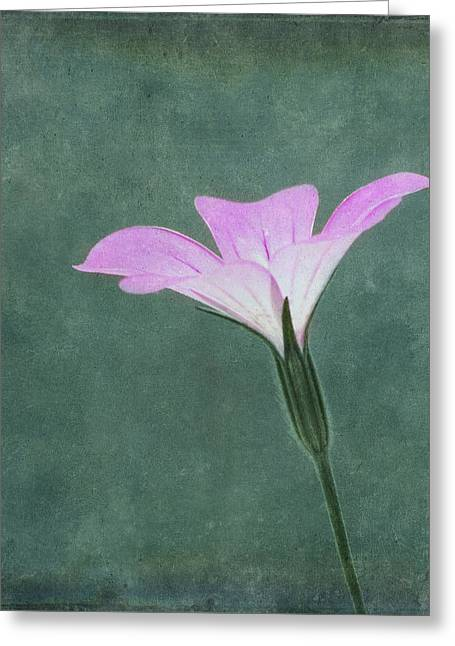 Innocence Greeting Cards - Impressions Greeting Card by Kim Hojnacki