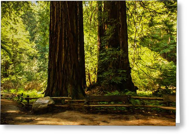 Marin County Greeting Cards - Impressions of Muir Woods California Greeting Card by Georgia Mizuleva