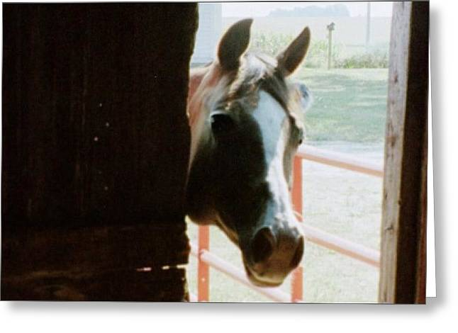 The Horse Greeting Cards - Impressor Greeting Card by Denise Fletcher