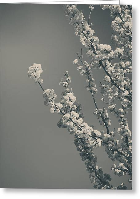 Blooming Trees Greeting Cards - In a Beautiful World Greeting Card by Laurie Search