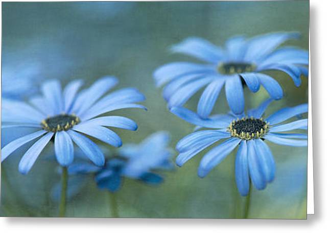 Shade Photographs Greeting Cards - In A Corner Of A Garden Greeting Card by Priska Wettstein
