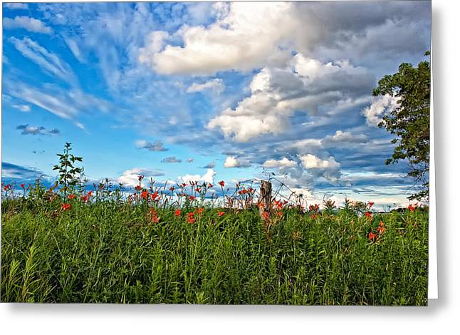 Ontario Landscape Print Greeting Cards - In a Ditch Greeting Card by Steve Harrington