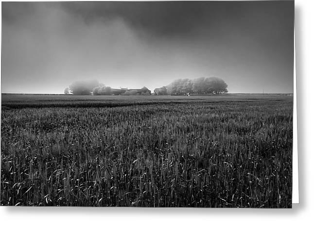 Misty Hills Farm Greeting Cards - In a Fog Greeting Card by Svetlana Sewell