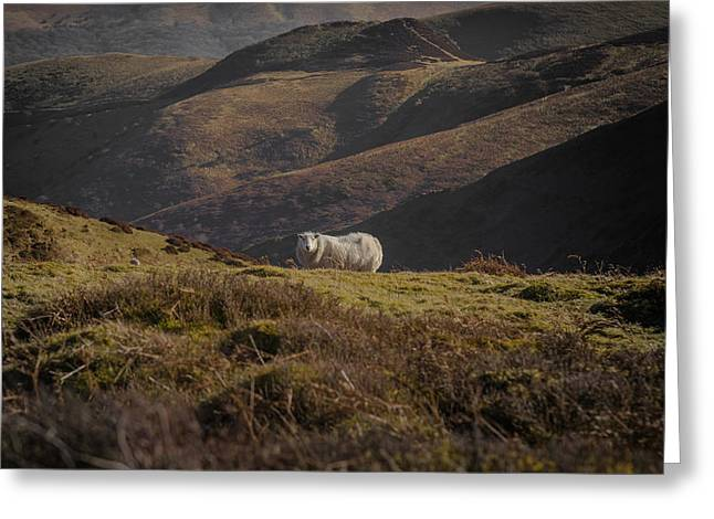 Mills Photographs Greeting Cards - In a rugged landscape Greeting Card by Chris Fletcher