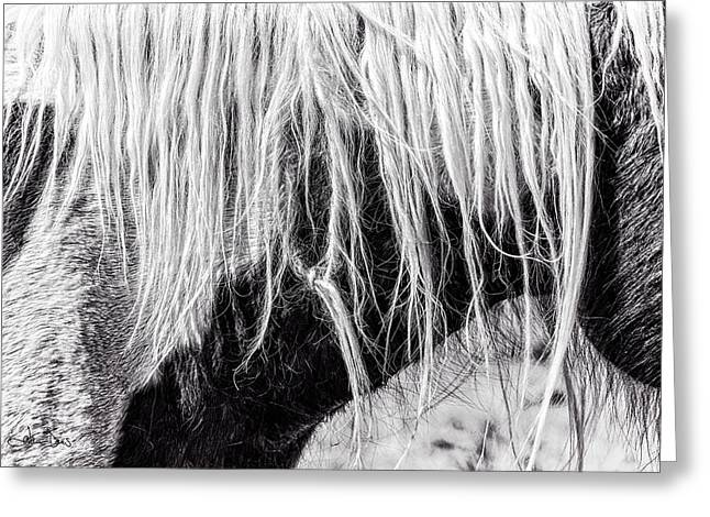 Beautiful Equine Photos Fine Art Greeting Cards - In A Tangle Greeting Card by Joan Davis
