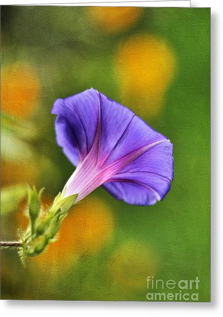 Garden Petal Image Greeting Cards - In all her Glory Greeting Card by Darren Fisher