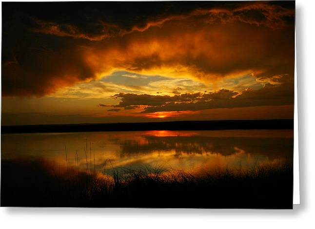 Wildlife Refuge. Greeting Cards - In All His Glory Greeting Card by Jeff  Swan
