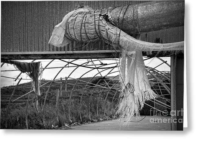 Shed Photographs Greeting Cards - In an abandoned mushroom farm BW Greeting Card by RicardMN Photography
