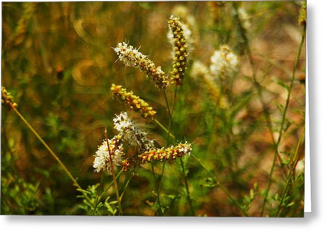 Small Flowers Greeting Cards - In Beauty With The Wind Greeting Card by Jeff  Swan