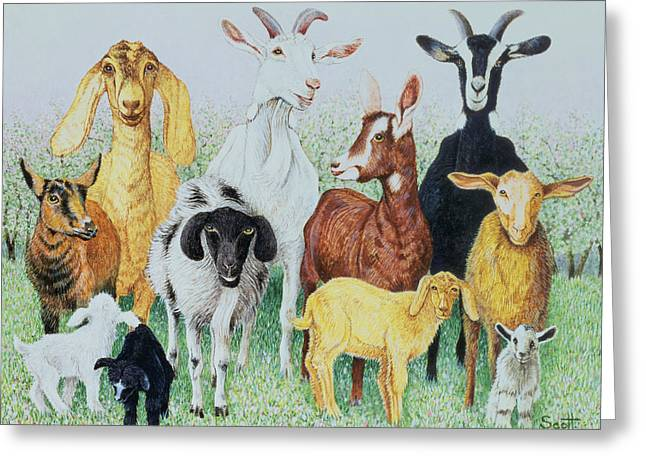 Goat Photographs Greeting Cards - In Clover Greeting Card by Pat Scott