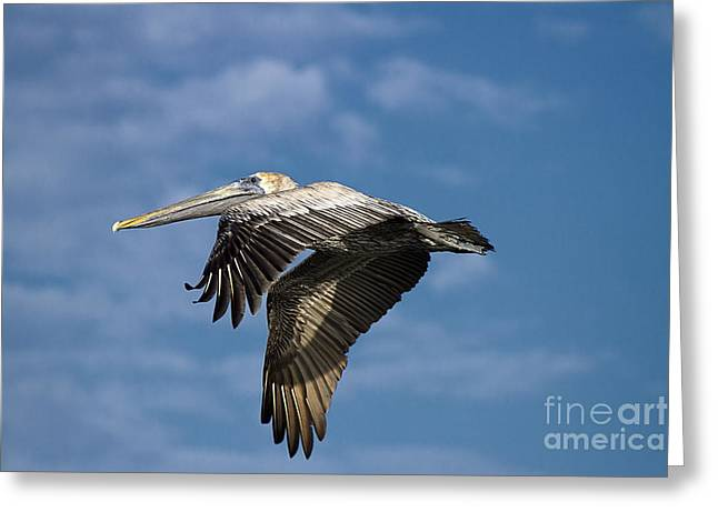 Flying Animal Greeting Cards - In Flight Greeting Card by Anne Rodkin